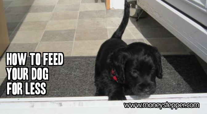 How to Feed Your Dog for Less